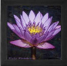 Purple tropical Water Lily on tile inset in keepsake box