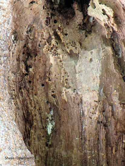 Image enlarged of a lady in a tree in Key West