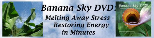 Banana Sky DVD header