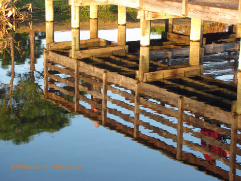 boardwalk reflections 3 at Wakodahatchee Wetlands