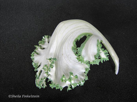 white flowering kale - single leaf