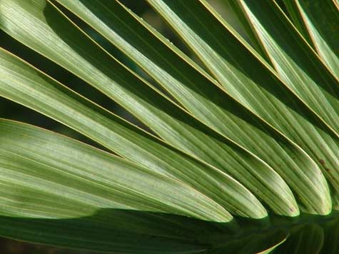 palm fronds facing down