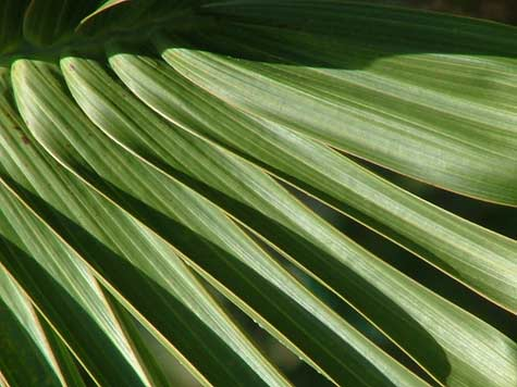 bottle palm tree leaves moving upward
