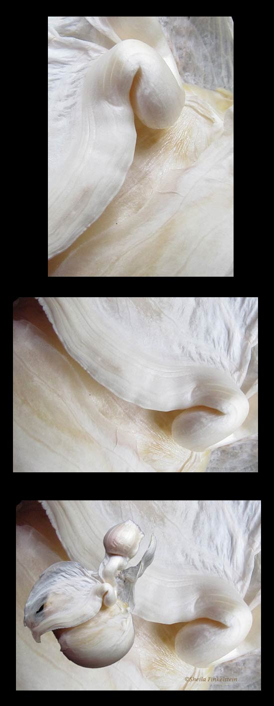 3 views of garlic bulb