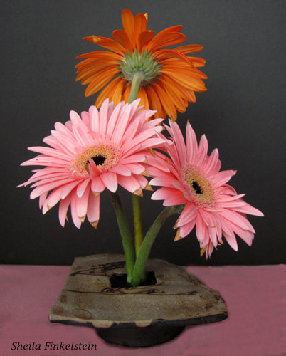 3 small gerber daisies standing erect