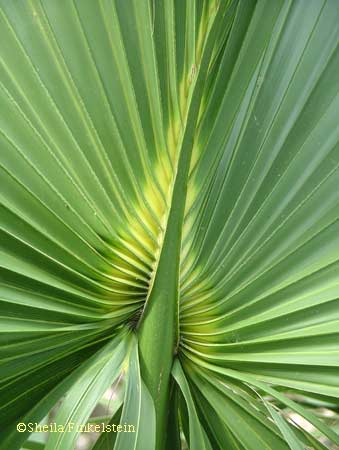Heart image in palm leaf - vertical view in Treasure Your Life Now ezine and blog post