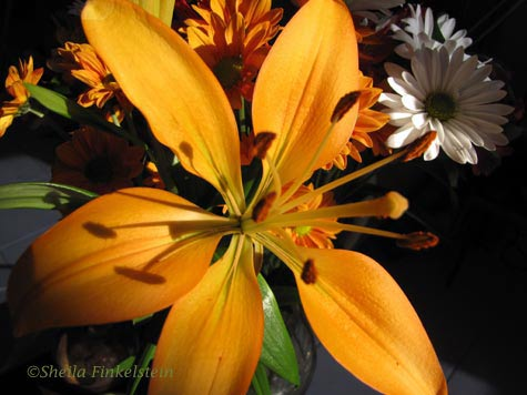 Orange lily and chrysanthemums