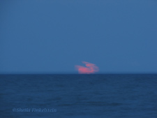 pink moon just starting to rise over the ocean
