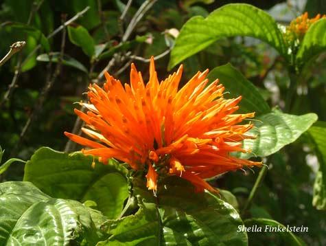 orange flower in Butterfly World