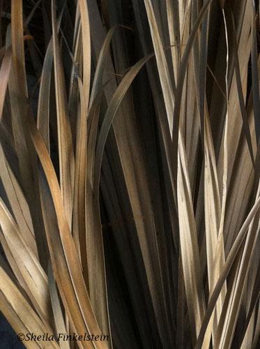 palm frong close up 1