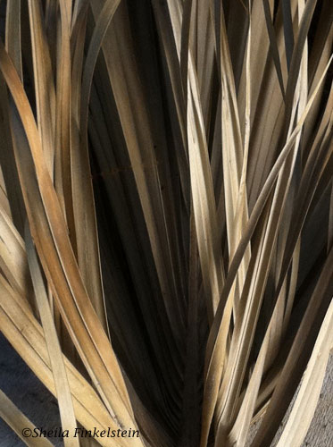 palm frond close up - jungle feeling