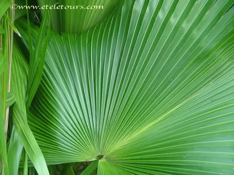 palm frond radiating to the left