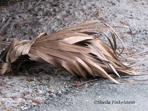 palm leaves clumped on ground