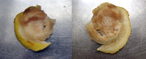 two profiles of pear faces