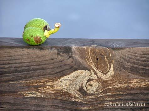 pond apple on boardwalk railing in Wakodahatchee Wetlands