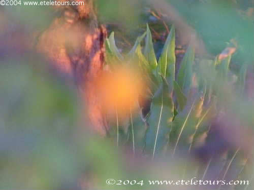 Blurred photo of a flower in Wakodahatchee Wetlands