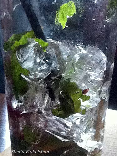 Ice cubes through the glass - mojitio drink