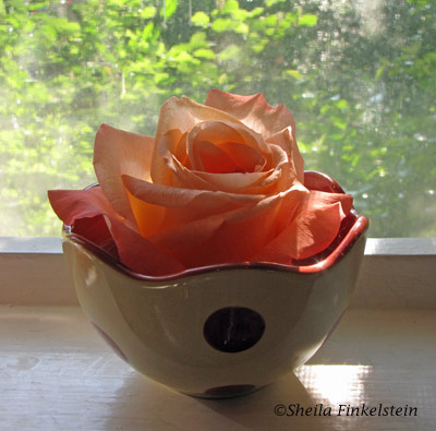 backlit rose on kitchen window sill
