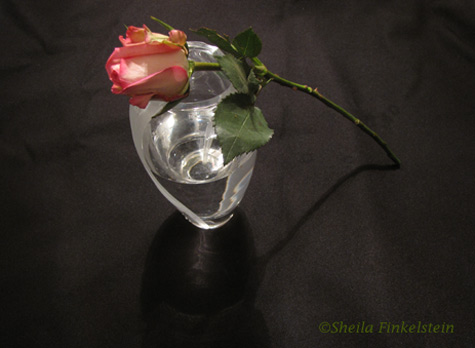red rose resting on vase - stem shadows, vase reflections