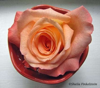 rose in bowl