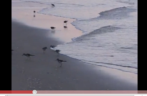 Sandpipers on Boynton Beach sunrise at the surf