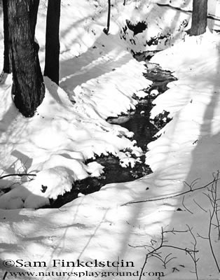 snow in Deep Run Old Bridge, NJ