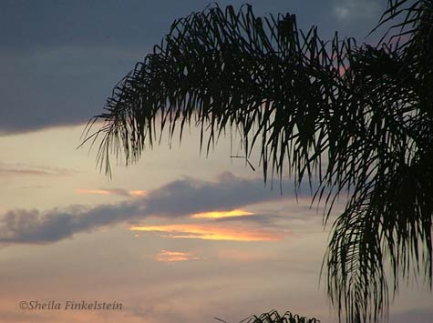 sunset in Boynton Beach framed by palm tree leaves