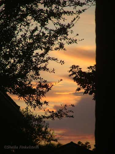sunset framed by trees and rooftops
