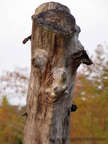 tree trunk faces