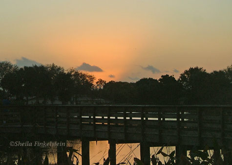 sunrise opening at Wakodahatchee Wetlands