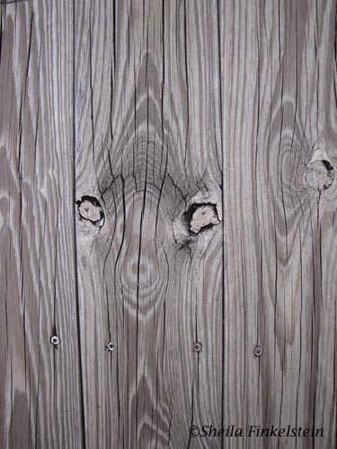 ET in a wood knot