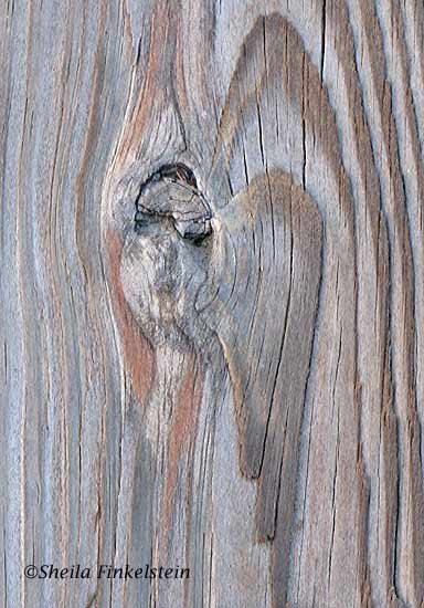 Princess or angel in a wood knot