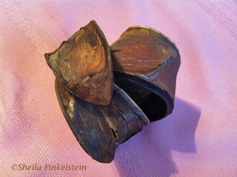 wood pod - another view, , with shadows, on a pink table cloth