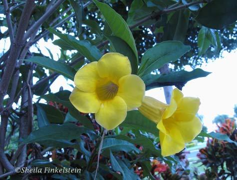 Yellow flower sparked silk painting mandala 1