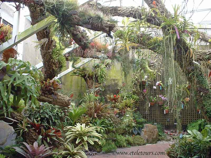 EZezine Archives > Picture to Ponder > orchid room in Fairchild ...